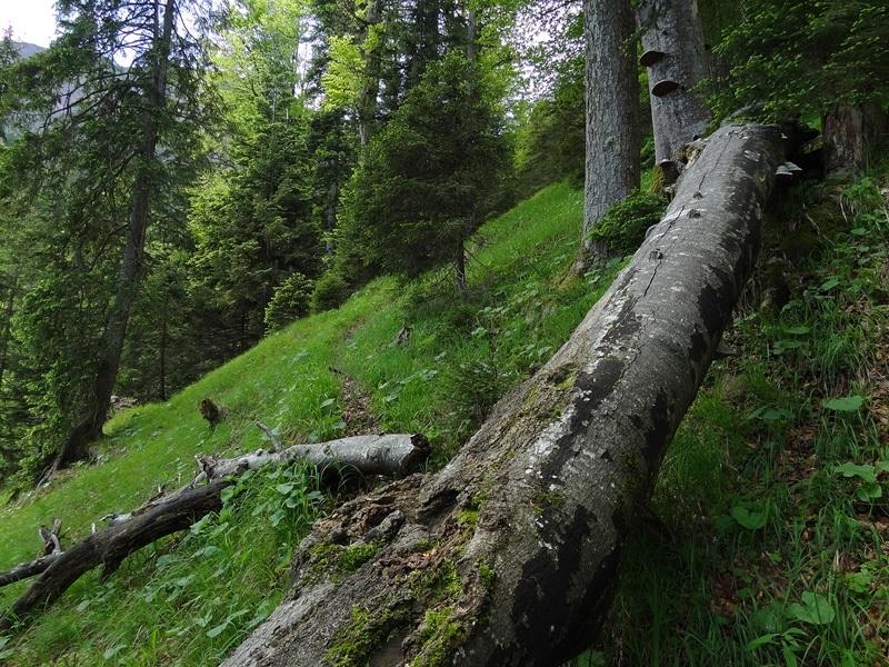 Herzogstand über Rauteckkopf: Dieser kaum mehr genutzte Steig führt zur Unteraueralm.