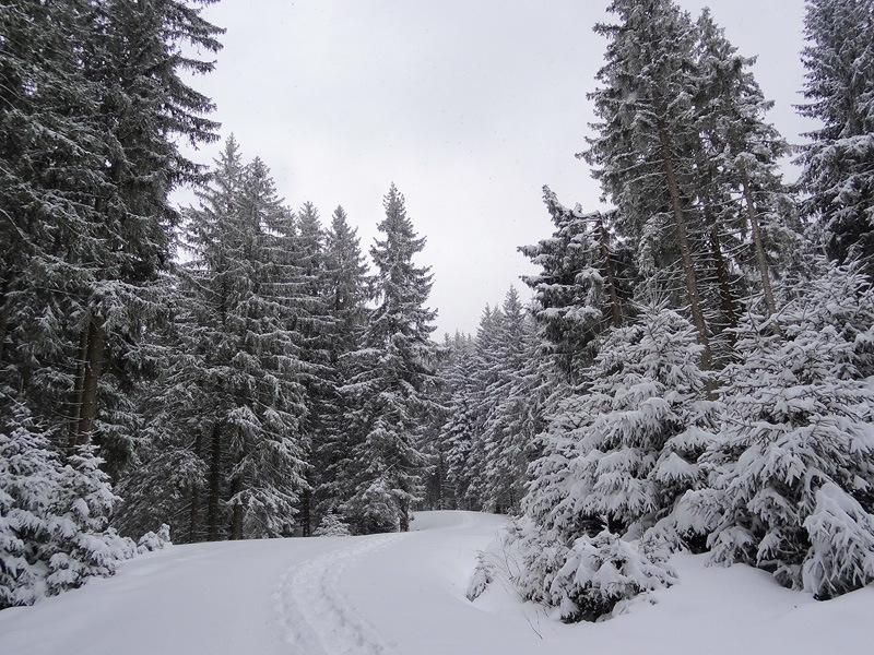 Hohe Bleick und Niederbleick: Zum Winterwandern sind die vielen Forststraßen in den Trauchbergen durchaus von Vorteil.