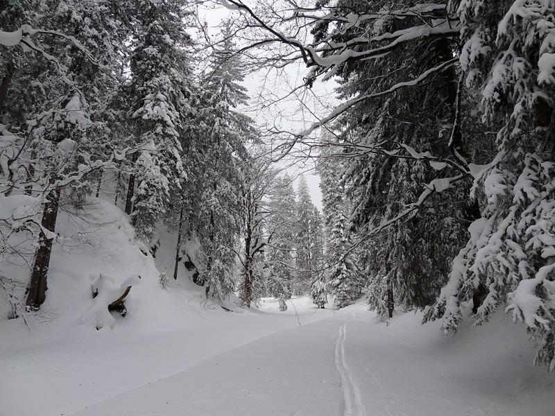 Schneeschuhwandern um Roß- und Buchstein: Einsame Spur von Kreuth ins Schwarzenbachtal.