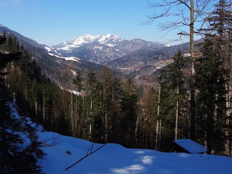 Schwarzenberg bei Oberaudorf: Wildalpjoch und Wendelstein: Am waldreichen Schwarzenberg sind die Ausblicke dünn gesät.