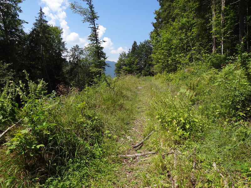Sieben Quellen, Archtalschlucht und Asamklamm: Oberhalb der Asamklamm verläuft dieser versteckte, idyllische Weg.