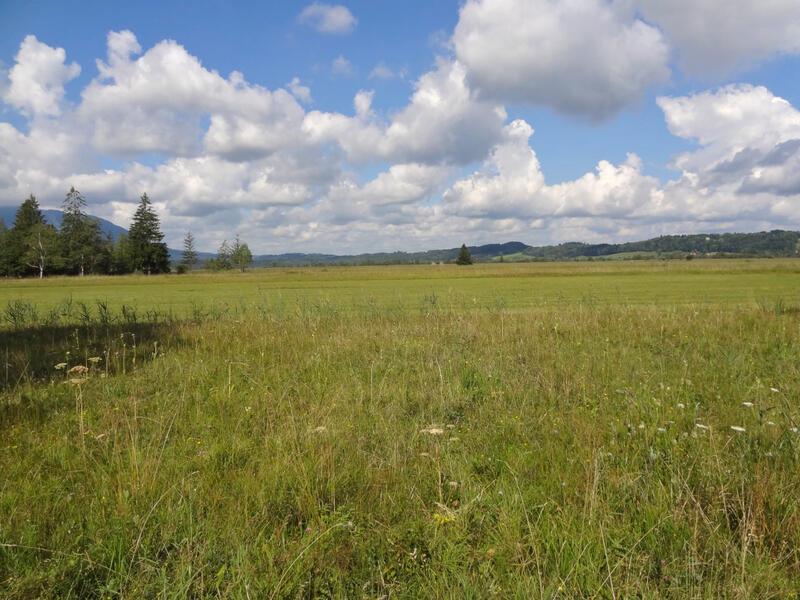 Moosbergsee und Langer Köchel: Murnauer Moos: Im Norden wird das Murnauer Moos von einem wallartigen Molassehügel begrenzt. Dahinter liegt der Staffelsee.