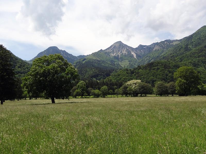 Schmugglerweg zum Klobenstein: Geigelstein: Parkähnliche Landschaft bei Ettenhausen mit Blick nach Süden zum Geigelstein, dem Chiemgauer Blumenberg.