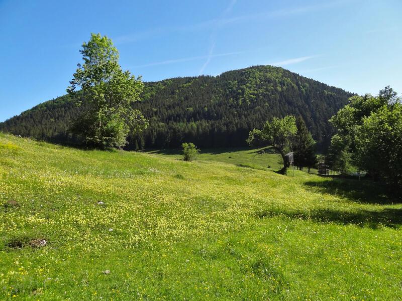 Farrenpoint und Schuhbräualm: Sulzberg: Die Lichtung der Schlipfgrubalmmit dem dicht bewaldeten Sulzberg.