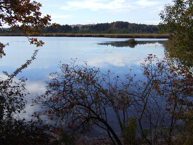 Maisinger Schlucht und Maisinger See: Maisinger See: Vom Damm am Weiherhaus hat man den besten Blick über den Maisinger See.