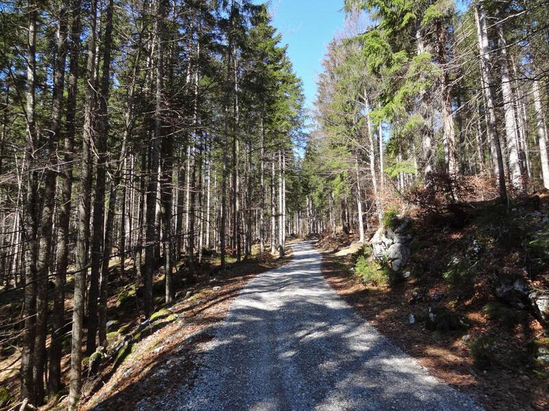 Ruine Ehrenberg und highline179: Auf gemütlichen Wanderwegen geht es durch den Klausenwald hinauf zum Schlosskopf.