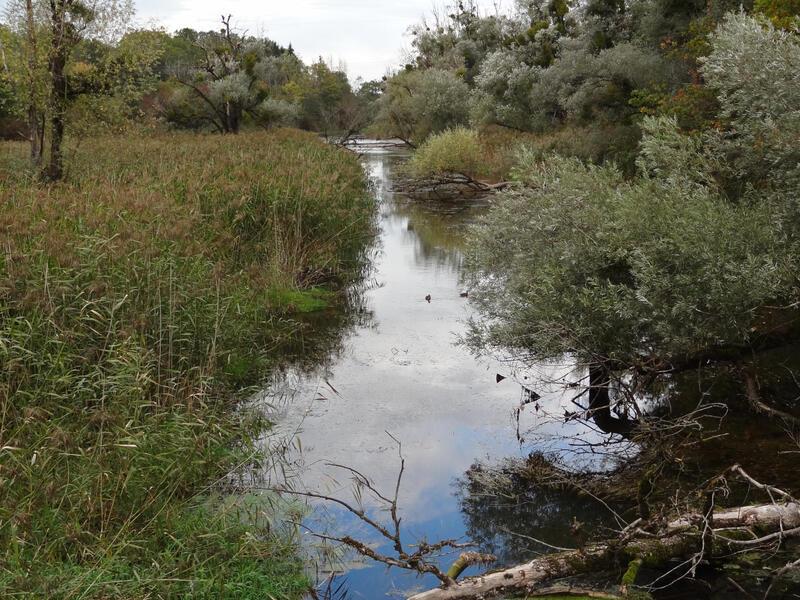 Wolfsschlucht und Mühlsteinbruch Hinterhör: Inn-Altwasser: Entlang des Inns liegen viele Altwasser, die bei der Begradigung übrig blieben. Manche sind wertvolle Biotope, andere werden als Badeseen genutzt.