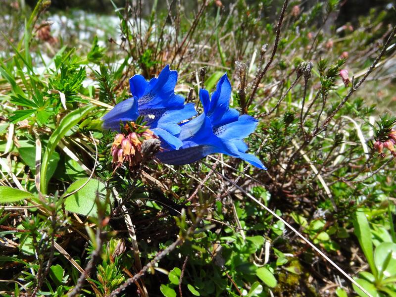 Leutaschklamm, Ederkanzel und Lautersee: Ferchensee: Am Ferchensee ist es meistens ruhiger als am Lautersee.