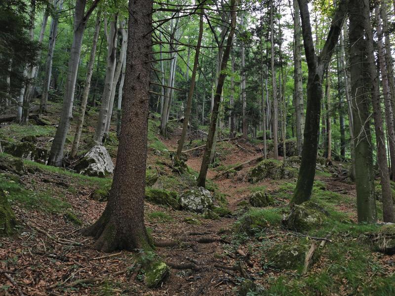 Heuberg-Runde: Blockschuttwald: Der Aufstieg führt durch einen hübschen Blockschuttwald.