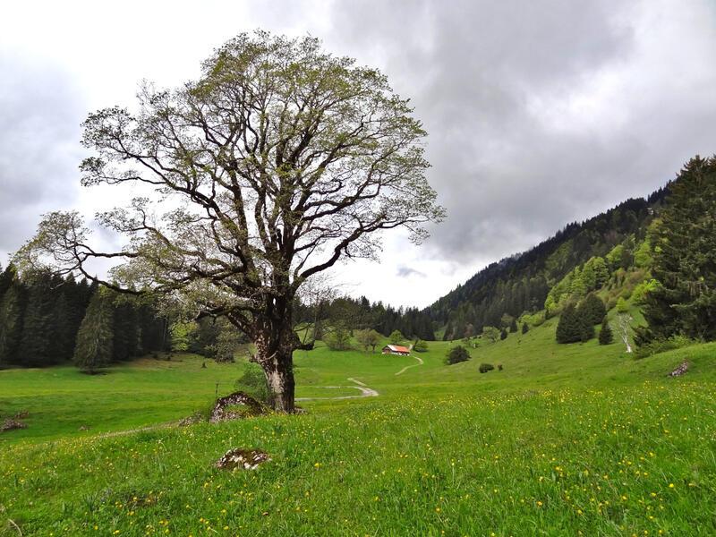Stuiben und Steineberg: Gunzesrieder Tal: Die Falkenalpe im Gunzesrieder Tal.