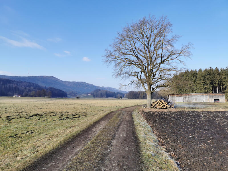 Ainringer Moos: Högl: Unterwegs ins Ainringer Moos. Der bewaldete Rücken links ist der Högl.