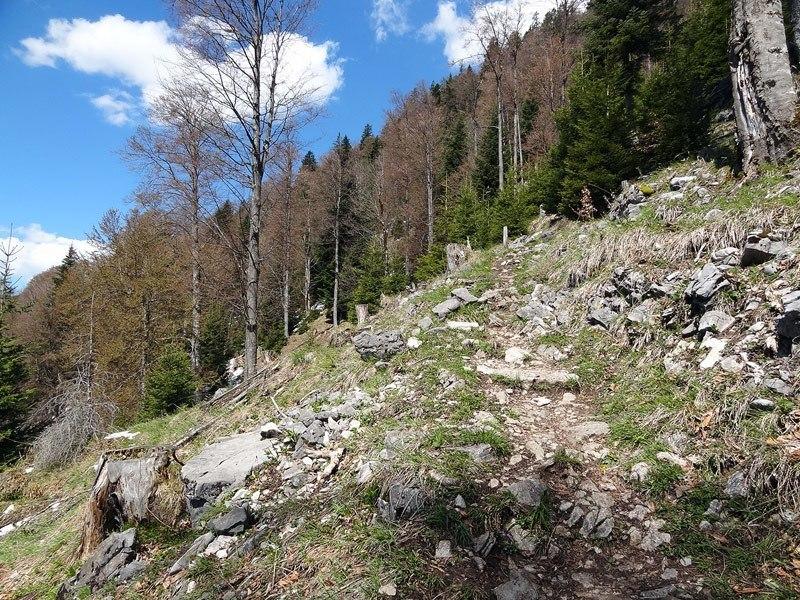 Hirschhörnlkopf und Jochberg: Ein sonniger Weg führt von der Jachenau auf den Hirschhörnlkopf.