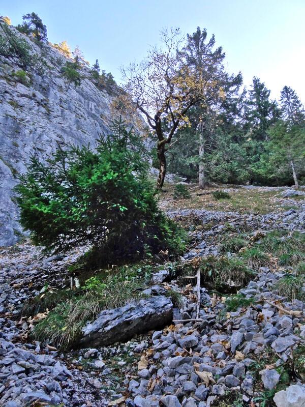 Kofel über Marxersteig: Marxersteig: Die Spuren durch dieses Geröllfeld leiten zu den Kletterrouten. Der Marxersteig verläuft nebenan im Wald.