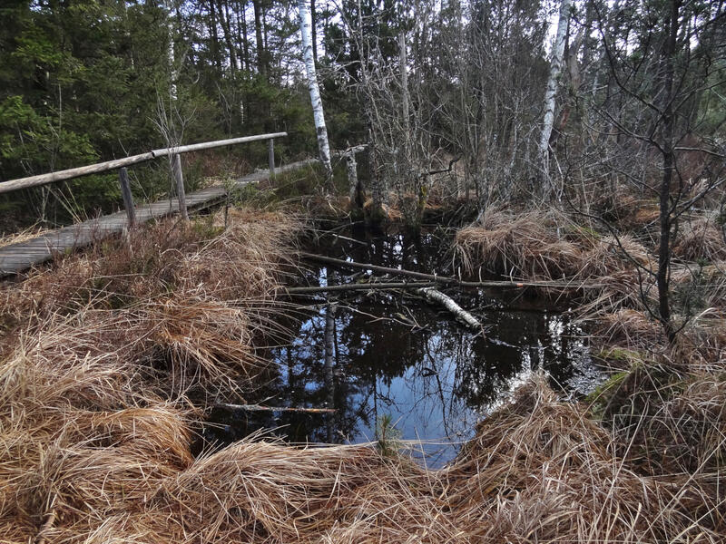 Murnauer Moos: Moorloch: Der wiedervernässte Lange Filz verwandelt sich langsam zurück in ein echtes Hochmoor.