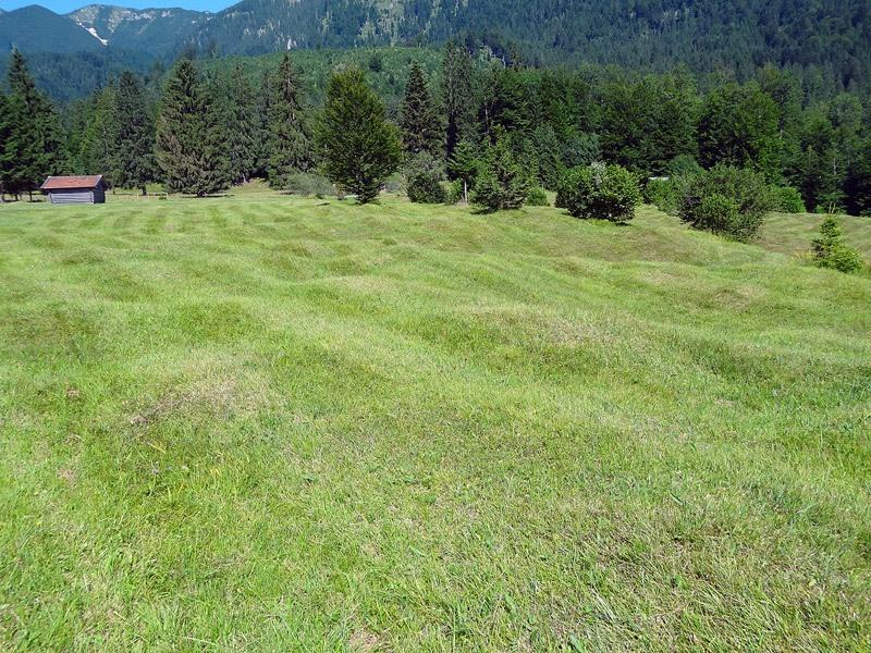 Burgruine Werdenfels und Pflegersee: Reschbergwiesen: Buckelwiesen wie hier am Reschberg sind selten geworden. Viele wurden eingeebnet, um sie leichter bewirtschaften zu können.