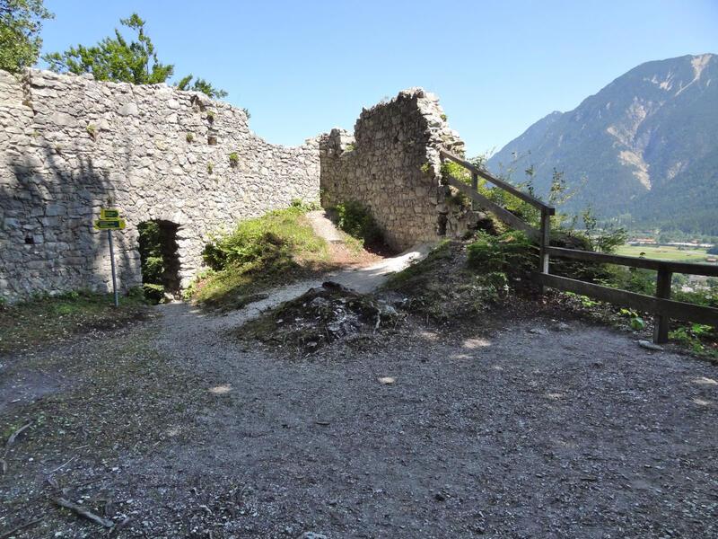 Burgruine Werdenfels und Pflegersee: Große Telekie: Die aus Gärten ausgewilderte Große Telekie wächst verstreut im Loisachtal. Der Neophyt wird auch Scheinalant genannt, da er häufig mit dem Alant verwechselt wird.