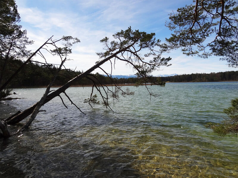 Osterseen-Umrundung: Großer Ostersee: Der Uferbereich des Großen Ostersees darf aus Naturschutzgründen nur an wenigen Stellen betreten werden. Baden ist an ausgewiesenen Plätzen erlaubt.