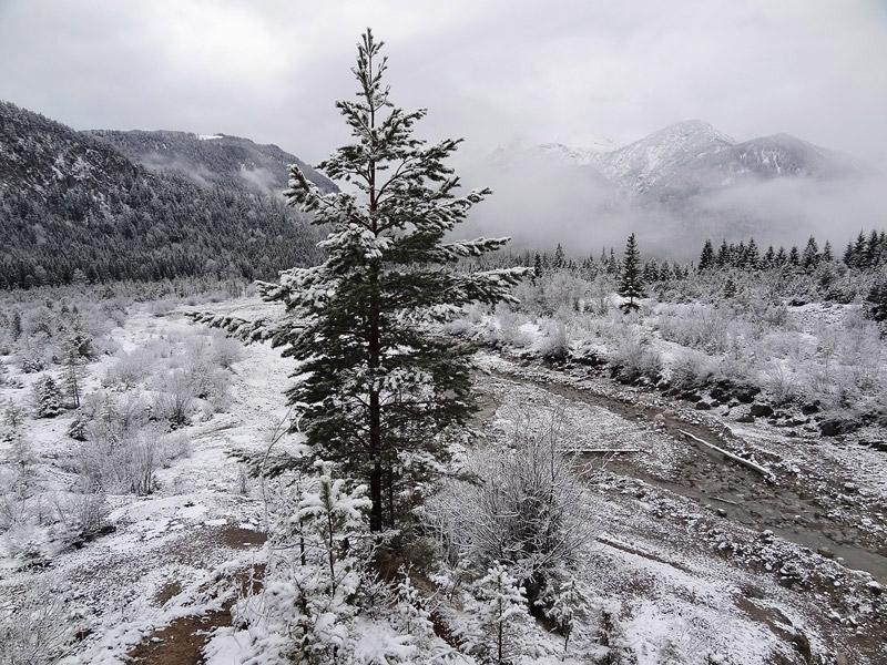 Friederspitz: Friedergrieß: Die Friederlaine lagert im Friedergrieß Unmengen an Hauptdolomitschutt ab. Nur im Randbereich können größere Bäume heranwachsen.